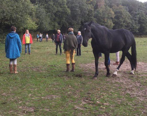Opstellingen met paarden