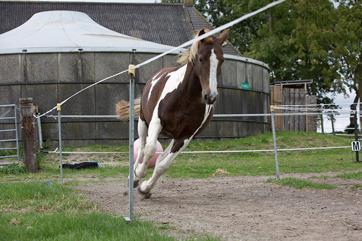 Leren van een paard….!?